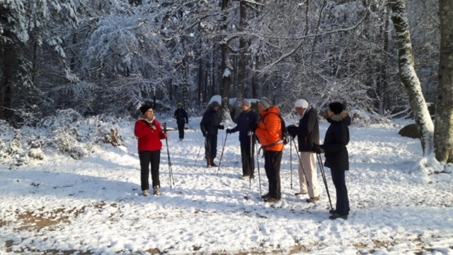 Marche nordique dans la forêt de Fontainebleau